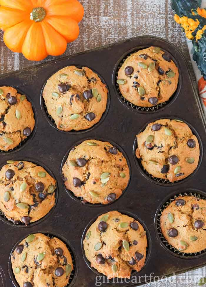 Pumpkin chocolate chip muffins in a muffin tin alongside a decorative pumpkin.