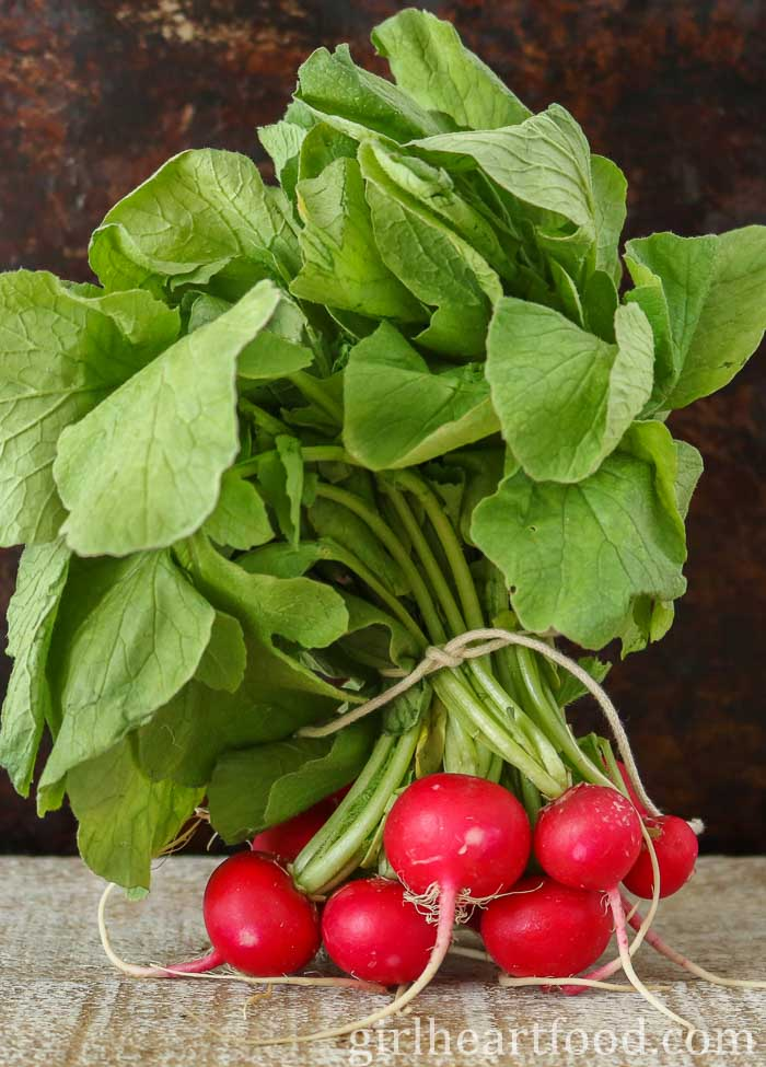 Bunch of fresh radishes with greens tied with a string.